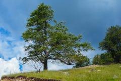 Zadziwiający krajobrazowy Targ Jiu Obraz Royalty Free