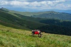 Zadziwiający krajobrazowy Targ Jiu Zdjęcie Royalty Free
