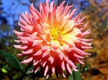 Zadziwiający kwiat Zdjęcie Royalty Free
