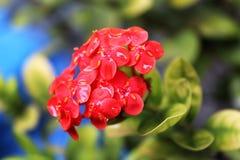 Zadziwiający kwiat fotografia royalty free
