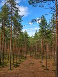 zadziwiający las Zdjęcia Royalty Free