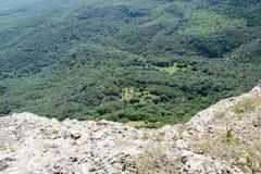Zadziwiający naturalny spojrzenie zieleni góry las Fotografia Royalty Free