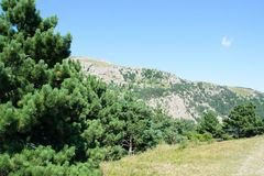Zadziwiający naturalny spojrzenie zieleni góry las Obrazy Royalty Free