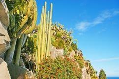 Zadziwiający ogród w Monaco Fotografia Royalty Free