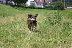 Zadziwiający pies Fotografia Royalty Free