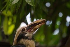 zadziwiający ptak zdjęcia stock