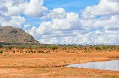 Zadziwiający sawanna krajobraz Zdjęcia Royalty Free
