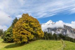 Zadziwiający sen jak Szwajcarski wysokogórski góra krajobraz Zdjęcia Royalty Free