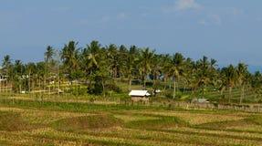 Zadziwiający widok agrar kultura w Lombok, Indonezja Zdjęcia Stock