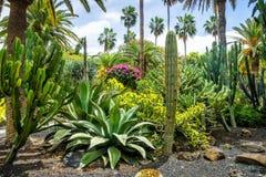 Zadziwiający widok kaktusa parka teren w Garcia Sanabria parku Locat Fotografia Stock