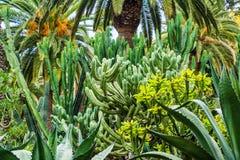 Zadziwiający widok kaktusa parka teren w Garcia Sanabria parku Locat Obraz Royalty Free