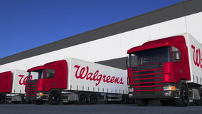 Zafrachtowanie semi przewozi samochodem z Walgreens loga rozładunkiem lub ładowaniem przy magazynowym dokiem Redakcyjny 3D render Fotografia Stock