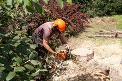 Zagende de boomboomstam van de ketting Royalty-vrije Stock Afbeeldingen