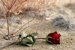 zaginionej miłości Zdjęcia Royalty Free