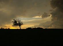 zagorzały drzewo Zdjęcia Stock