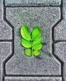 Zagrażająca zieleń Fotografia Stock