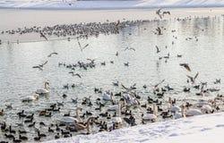 Zagreb, lac Jarun Images stock