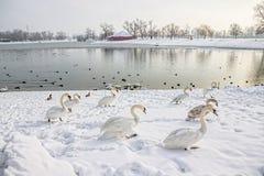 Zagreb, lac Jarun Photo libre de droits