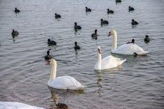 Zagreb, lac Jarun Photographie stock
