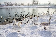 Zagreb, lac Jarun Photos stock