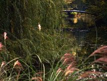 Zagreb, Maksimir, beautiful, town,recently,Beautiful, view ,white swans, love stock photography