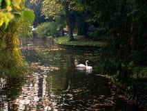 Zagreb Maksimir som är härlig, stad, för en tid sedan som är härlig, sikt, vita svanar, förälskelse royaltyfri foto