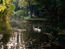 Zagreb, mooie Maksimir, Mooie stad, onlangs, mening, witte zwanen, liefde royalty-vrije stock foto