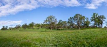 Zagrożonego Gatunku krajobraz Obraz Stock