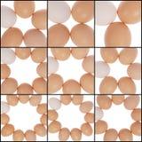 Zahl von den Eiern Ein Eiweiß Stockfoto