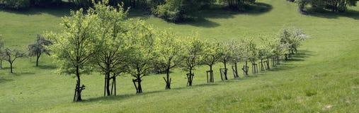 Zahl von Obstbäumen Stockbild