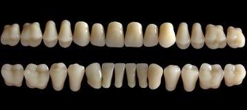 Zahn Stockbilder