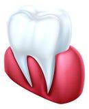Zahn und Gummi Lizenzfreies Stockfoto