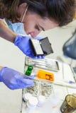 Zahnarzt Choosing Appropriate Equipment Stockfoto