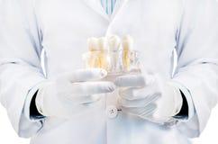 Zahnarzt, der Zahnmodell hält Lizenzfreies Stockfoto