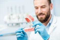 Zahnarzt mit künstlichem Kiefer Lizenzfreie Stockfotografie