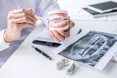 Zahnarzthandholding des Kiefermodells der Zähne und der Reinigung zahnmedizinisch mit zahnmedizinischem Werkzeug lizenzfreie stockfotos