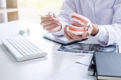 Zahnarzthandholding des Kiefermodells der Z?hne und der Reinigung zahnmedizinisch mit zahnmedizinischem Werkzeug lizenzfreie stockfotografie