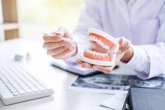 Zahnarzthandholding des Kiefermodells von Zähnen und von Reinigung zahnmedizinisches w stockfoto
