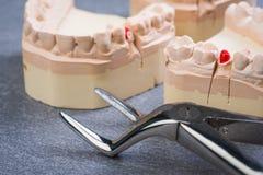Zahnform mit zahnmedizinischer Zange Lizenzfreie Stockfotografie