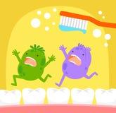 Zahnkeime und Zahnbürste vektor abbildung