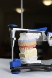 Zahnmedizinisch Stockfotos