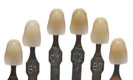 Zahnmedizinische Farben Lizenzfreies Stockbild
