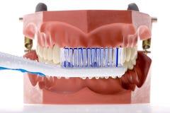 Zahnmedizinische Form und Zahnbürste 4 Lizenzfreie Stockbilder