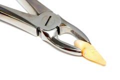 Zahnmedizinische medizinische Zange mit Zahnziehen Lizenzfreie Stockfotos