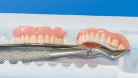 Zahnmedizinische Prothese auf dem Behälter und den Zangen Stockbilder