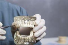 Zahnmedizinische Reinigungsdemonstration mit Modell Lizenzfreie Stockbilder