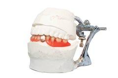 Zahnmedizinischer Laborartikulator mit zahnmedizinischer Prothese Stockbild