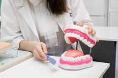 Zahnmedizinisches Büro Zahnarzt putzt Zähne mit Zahnbürste Stockbilder