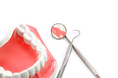 Zahnmedizinisches Baumuster Lizenzfreie Stockfotografie