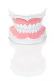 Zahnmedizinisches Baumuster der Zähne Lizenzfreie Stockbilder